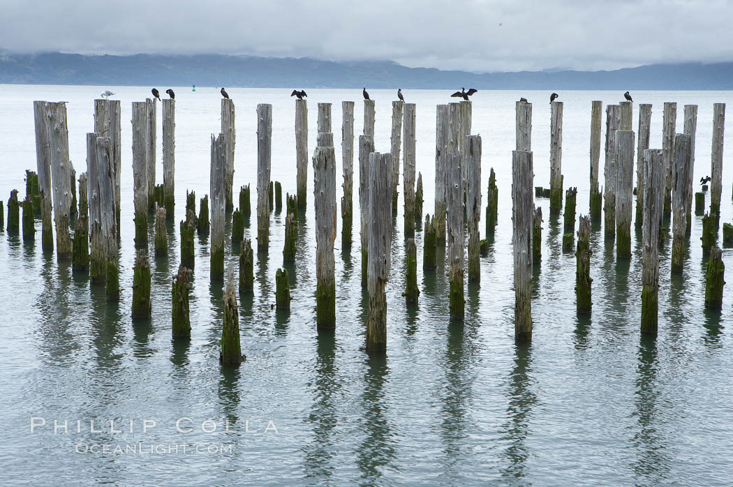 Derelict pilings, remnants of long abandoned piers. Columbia River, Astoria, Oregon, USA, natural history stock photograph, photo id 19384