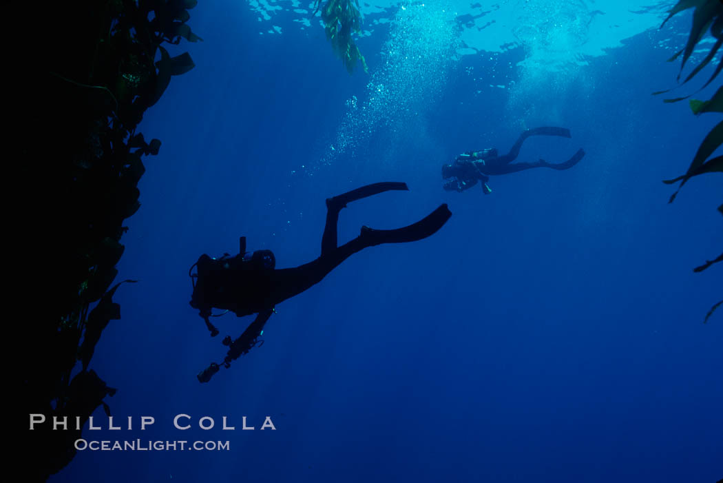 Divers. San Clemente Island, California, USA, natural history stock photograph, photo id 01259