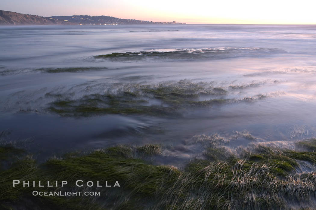 Eel grass sways in the waves at extreme low tide, the lights of La Jolla are visible in the distance.  San Diego. Torrey Pines State Reserve, San Diego, California, USA, natural history stock photograph, photo id 14733