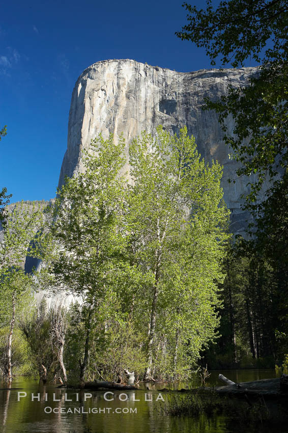 El Capitan rises above the Merced River, Yosemite Valley. Yosemite National Park, California, USA, natural history stock photograph, photo id 16102