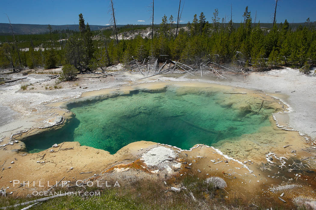 Emerald Spring, with its sulfur-lined sides, displays a deep green color, the result of its clear water (which would otherwise display as blue) and the deep yellow coloration of its sulfur lining. Norris Geyser Basin, Yellowstone National Park, Wyoming, USA, natural history stock photograph, photo id 13468
