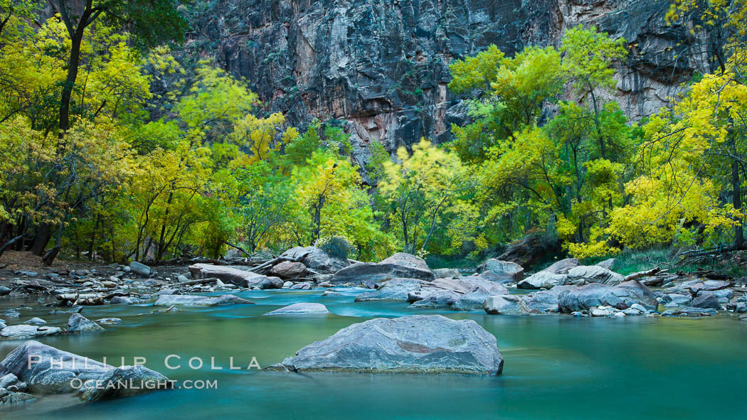 The Virgin River flows by autumn cottonwood trees, part of the Virgin River Narrows.  This is a fantastic hike in fall with the comfortable temperatures, beautiful fall colors and light crowds. Virgin River Narrows, Zion National Park, Utah, USA, natural history stock photograph, photo id 26117