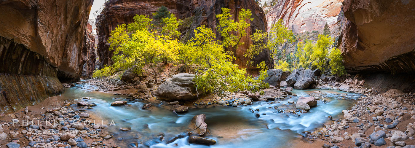Fall Colors in the Virgin River Narrows, Zion National Park, Utah. USA, natural history stock photograph, photo id 32634