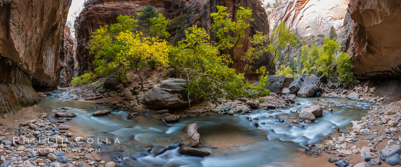 Fall Colors in the Virgin River Narrows, Zion National Park, Utah. Virgin River Narrows, Zion National Park, Utah, USA, natural history stock photograph, photo id 32632