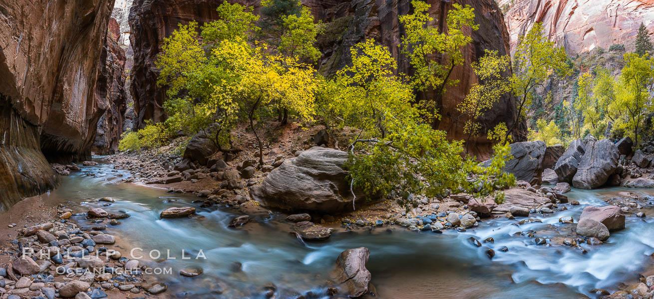 Fall Colors in the Virgin River Narrows, Zion National Park, Utah. Virgin River Narrows, Zion National Park, Utah, USA, natural history stock photograph, photo id 32631