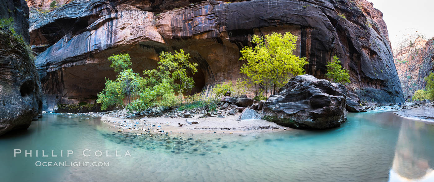 Fall Colors in the Virgin River Narrows, Zion National Park, Utah. USA, natural history stock photograph, photo id 32635