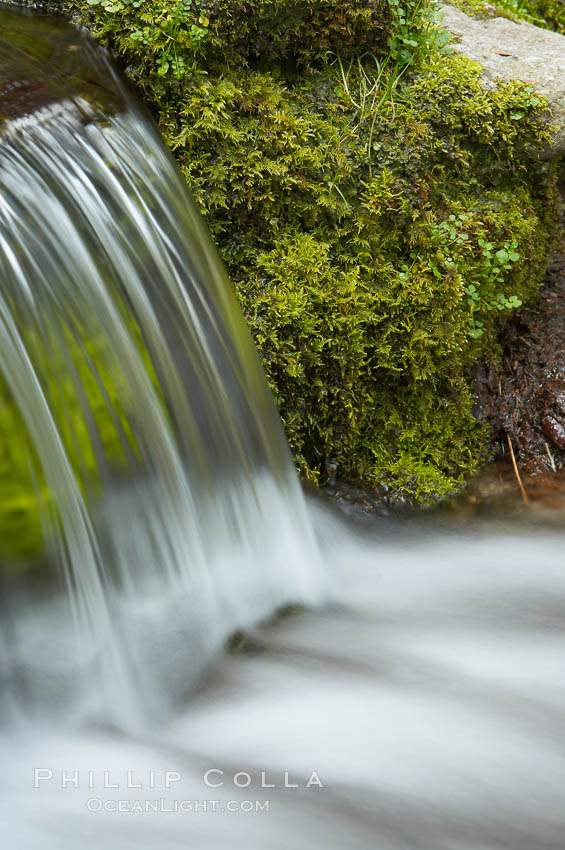 Fern Springs, a small natural spring in Yosemite Valley near the Pohono Bridge, trickles quietly over rocks as it flows into the Merced River. Yosemite Valley. Fern Springs, Yosemite National Park, California, USA, natural history stock photograph, photo id 16086