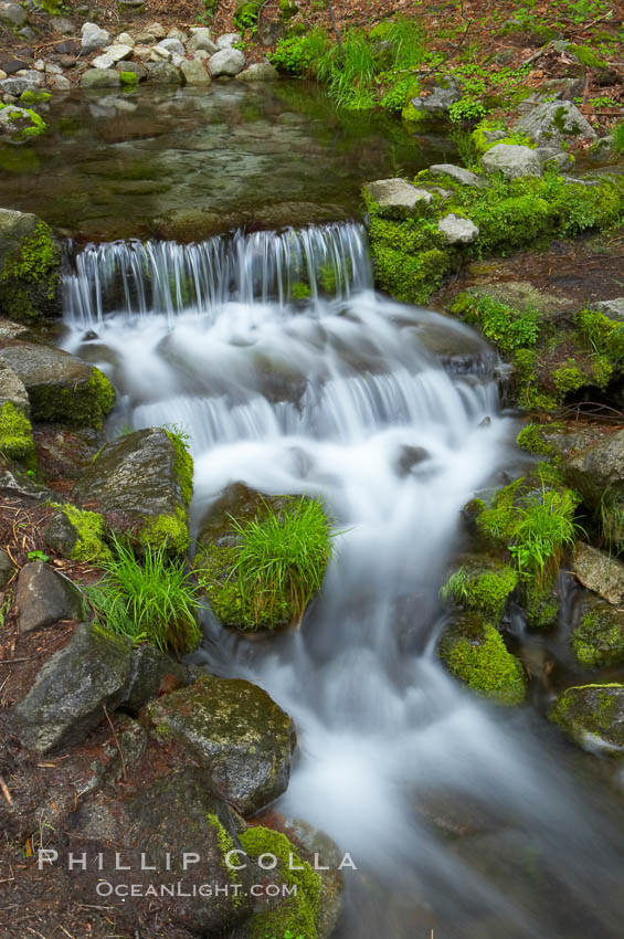 Fern Springs, a small natural spring in Yosemite Valley near the Pohono Bridge, trickles quietly over rocks as it flows into the Merced River. Fern Springs, Yosemite National Park, California, USA, natural history stock photograph, photo id 12648