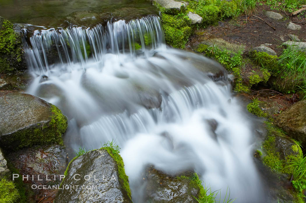 Fern Springs, a small natural spring in Yosemite Valley near the Pohono Bridge, trickles quietly over rocks as it flows into the Merced River. Fern Springs, Yosemite National Park, California, USA, natural history stock photograph, photo id 12649