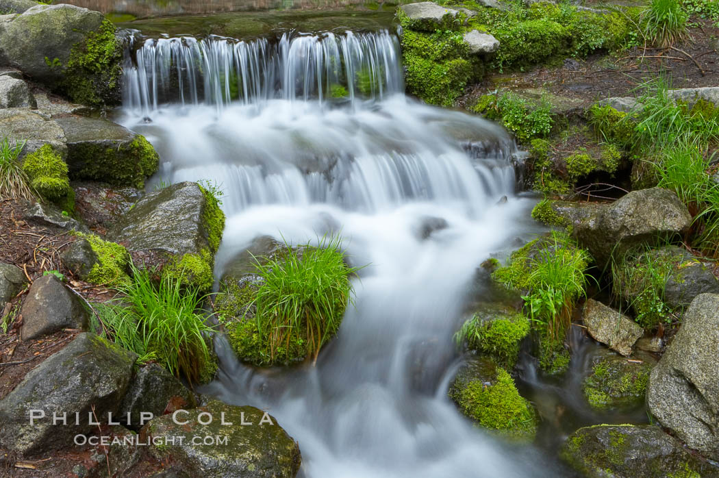 Fern Springs, a small natural spring in Yosemite Valley near the Pohono Bridge, trickles quietly over rocks as it flows into the Merced River. Fern Springs, Yosemite National Park, California, USA, natural history stock photograph, photo id 12653