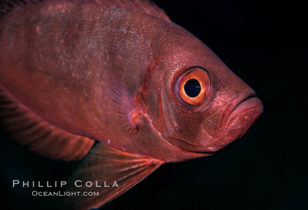 Unidentified fish. Egyptian Red Sea, natural history stock photograph, photo id 05243