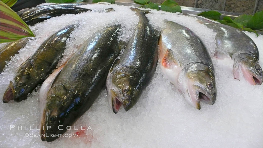 Fresh salmon on ice at the Public Market, Granville Island, Vancouver. Granville Island, Vancouver, British Columbia, Canada, natural history stock photograph, photo id 21200