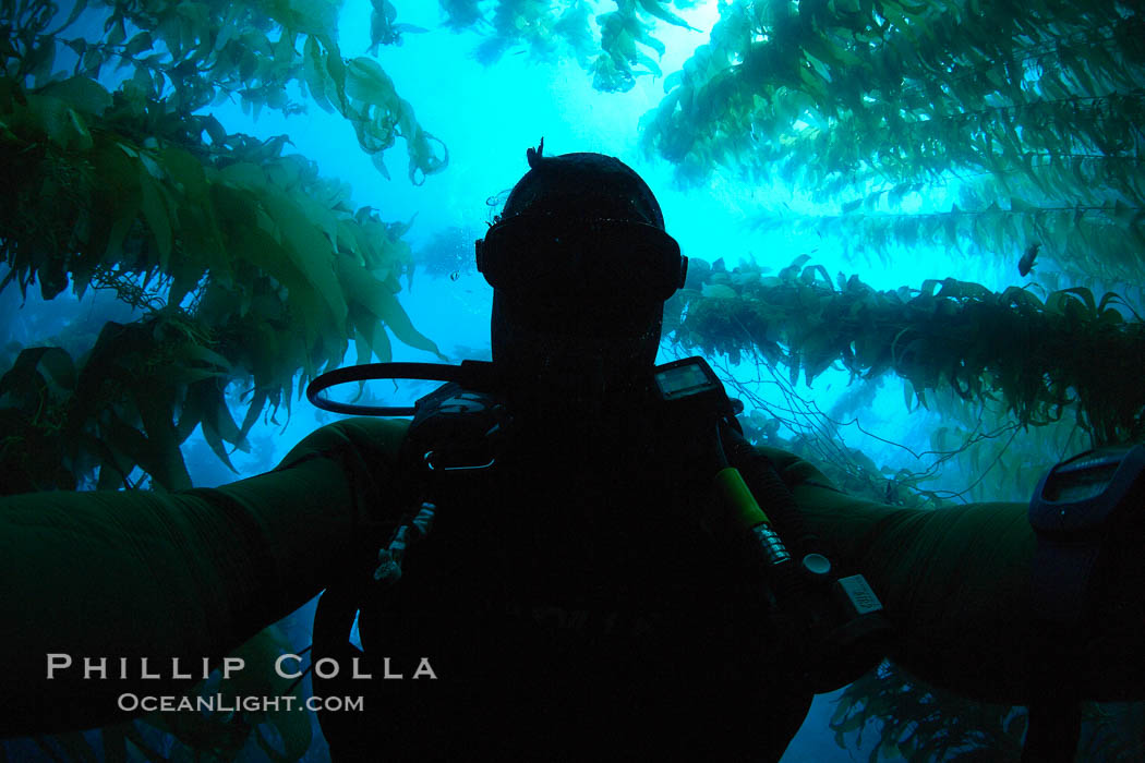 Self portrait, underwater swimming through kelp forest. Catalina Island, California, USA, Macrocystis pyrifera, natural history stock photograph, photo id 23492