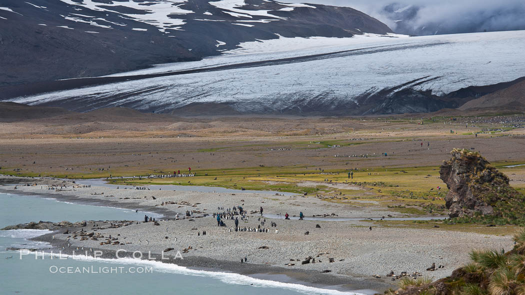 Glacier, beach, king penguins and antarctic fur seals. Fortuna Bay, South Georgia Island, natural history stock photograph, photo id 24614