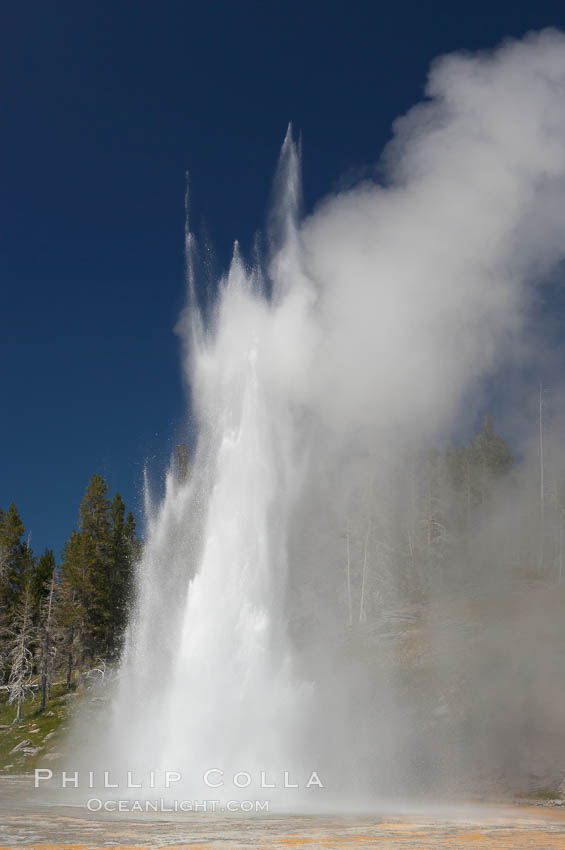 Grand Geyser erupts. Grand Geyser is a fountain-type geyser reaching 200 feet in height and lasting up to 12 minutes.  Grand Geyser is considered the tallest predictable geyser in the world, erupting about every 12 hours.  It is often accompanied by burst or eruptions from Vent Geyser and Turban Geyser just to its left.  Upper Geyser Basin. Upper Geyser Basin, Yellowstone National Park, Wyoming, USA, natural history stock photograph, photo id 13447