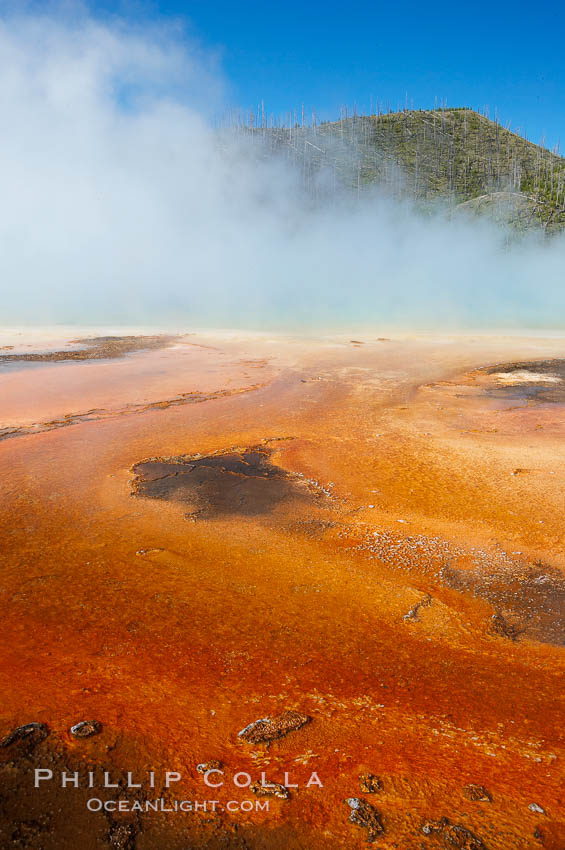 Grand Prismatic Spring displays brilliant colors along its edges, created by species of thermophilac (heat-loving) bacteria that thrive in narrow temperature ranges.  The outer orange and red regions are the coolest water in the spring, where the overflow runs off.  Midway Geyser Basin. Midway Geyser Basin, Yellowstone National Park, Wyoming, USA, natural history stock photograph, photo id 13591