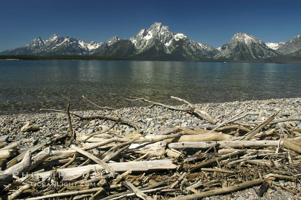 Driftwood along the shoreline of Jackson Lake with Mount Moran in the background. Grand Teton National Park, Wyoming, USA, natural history stock photograph, photo id 07411