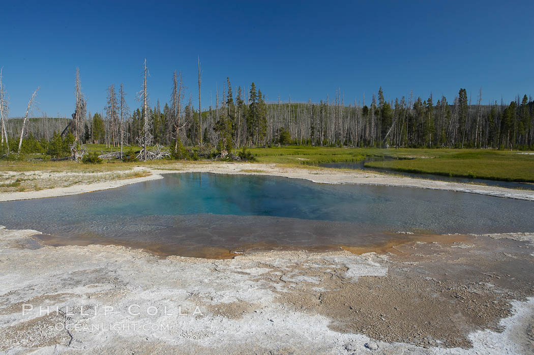 Green Spring. Black Sand Basin, Yellowstone National Park, Wyoming, USA, natural history stock photograph, photo id 13512