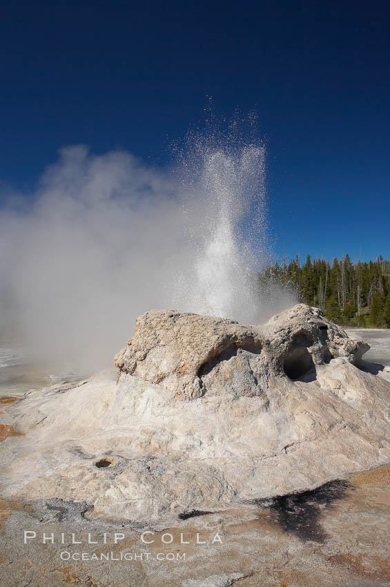 Grotto Geyser erupts.  Upper Geyser Basin. Upper Geyser Basin, Yellowstone National Park, Wyoming, USA, natural history stock photograph, photo id 13403