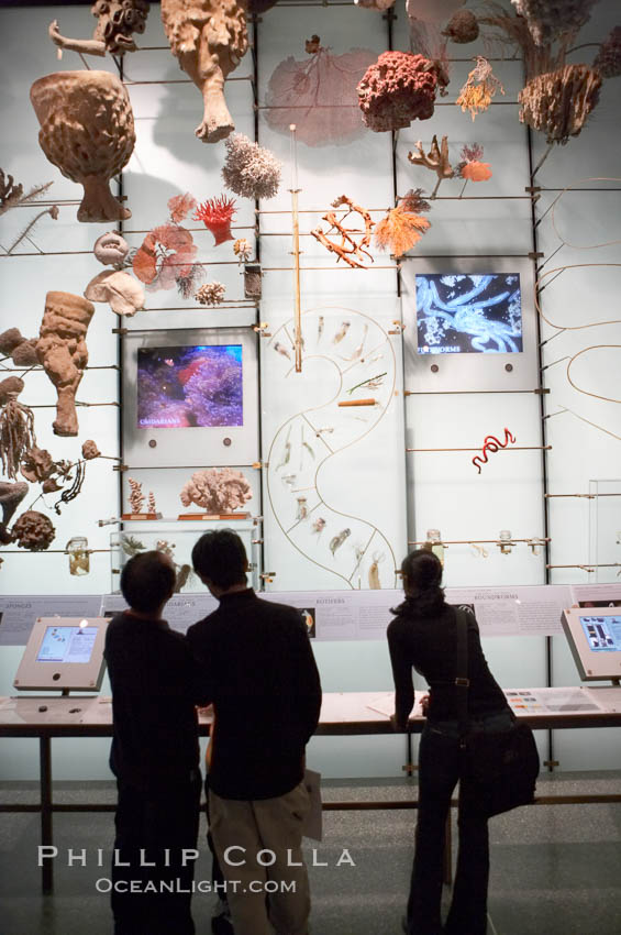 Visitors admire hundreds of species at the Hall of Biodiversity, American Museum of Natural History. New York City, USA, natural history stock photograph, photo id 11219