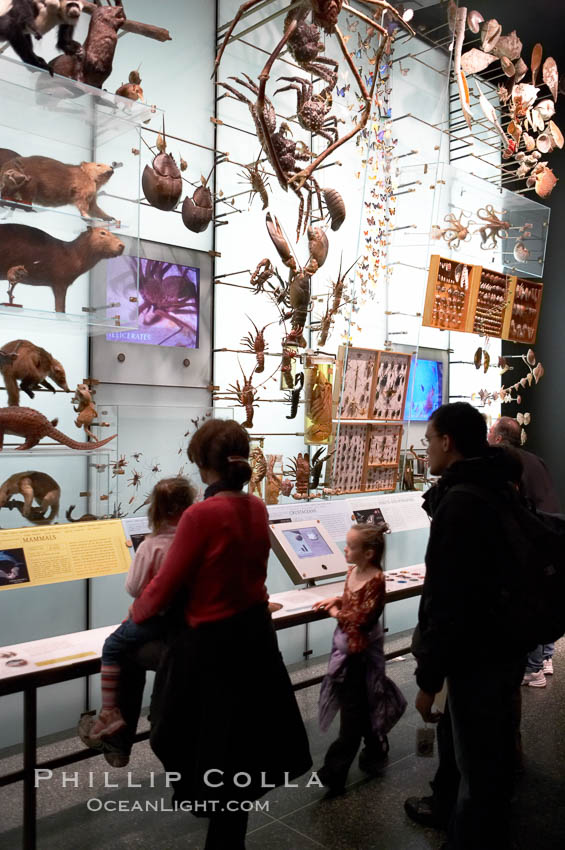 Image 11221, Visitors admire hundreds of species at the Hall of Biodiversity, American Museum of Natural History. New York City, USA, Phillip Colla, all rights reserved worldwide. Keywords: american museum of natural history, new york, new york city, usa.