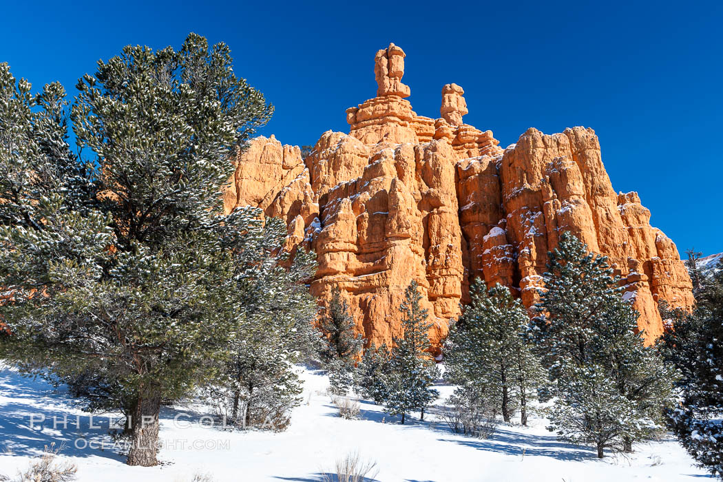 Hoodoos, walls and sandstone spires. Red Canyon, Dixie National Forest, Utah, USA, natural history stock photograph, photo id 18087