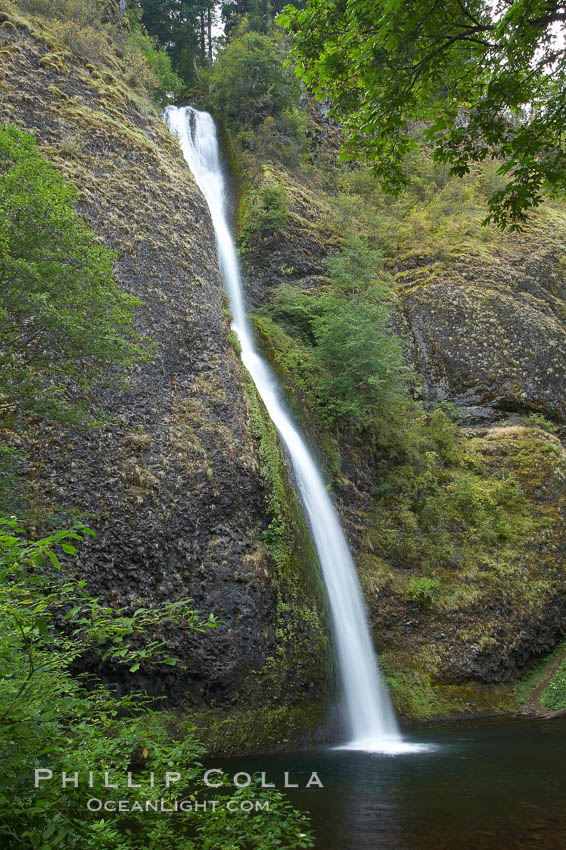 Horsetail Falls drops 176 feet just a few yards off the Columbia Gorge Scenic Highway. Horsetail Falls, Columbia River Gorge National Scenic Area, Oregon, USA, natural history stock photograph, photo id 19316