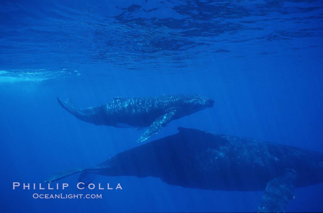 Image 01239, North Pacific humpback whale, mother and calf. Maui, Hawaii, USA, Megaptera novaeangliae