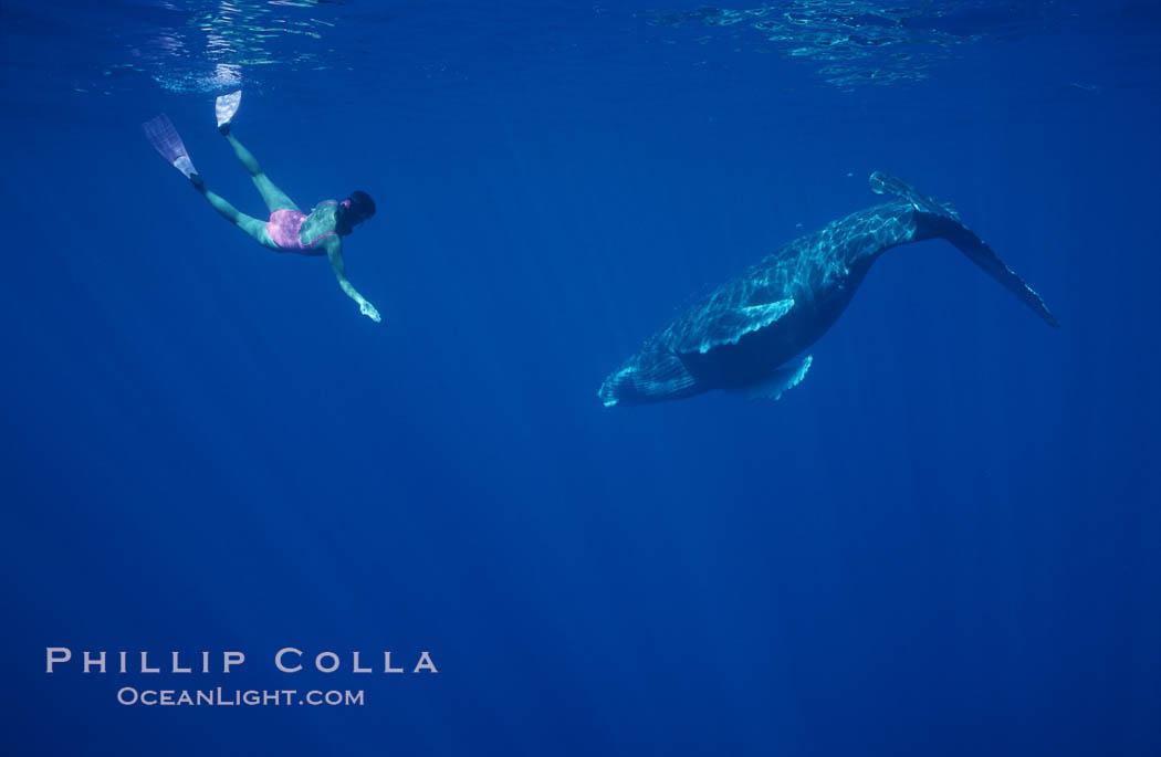North Pacific humpback whale calf, Mikako Kotani. Maui, Hawaii, USA, Megaptera novaeangliae, natural history stock photograph, photo id 01205