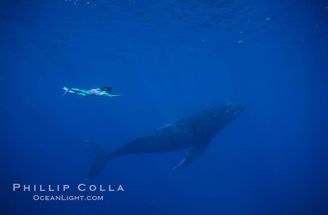 North Pacific humpback whale, Mikako Kotani. Maui, Hawaii, USA, Megaptera novaeangliae, natural history stock photograph, photo id 01209