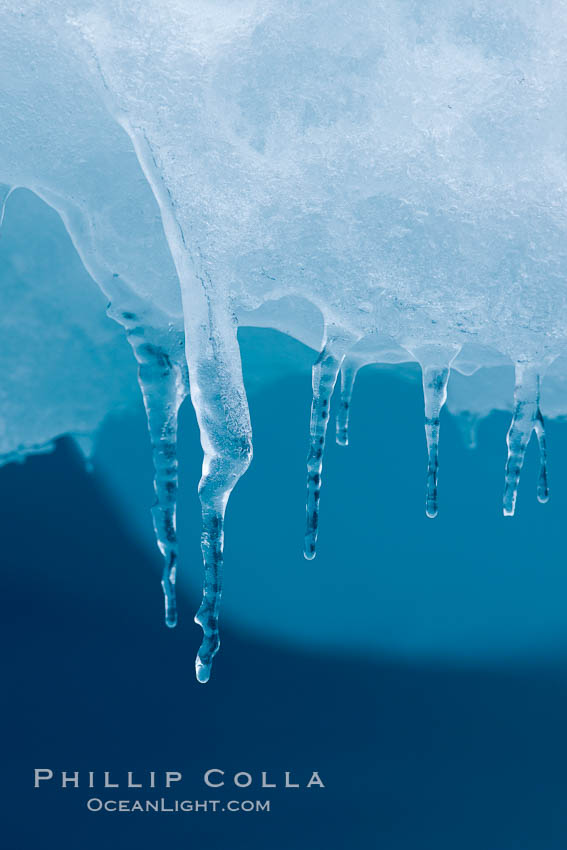 Icicles and melting ice, hanging from the edge of an blue iceberg.  Is this the result of climate change and global warming?. Brown Bluff, Antarctic Peninsula, Antarctica, natural history stock photograph, photo id 24804