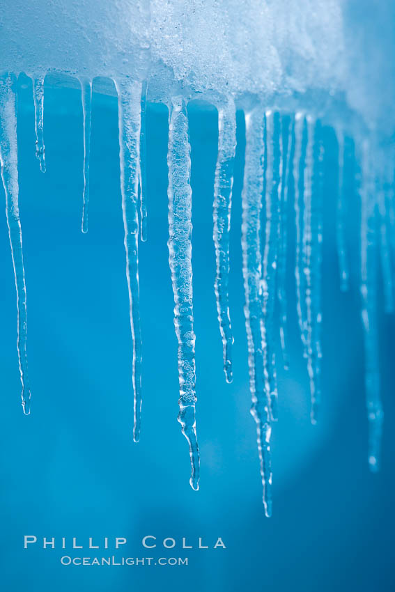 Icicles and melting ice, hanging from the edge of an blue iceberg.  Is this the result of climate change and global warming?. Brown Bluff, Antarctic Peninsula, Antarctica, natural history stock photograph, photo id 24864