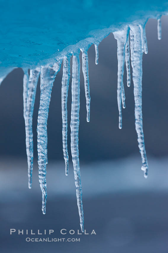 Icicles and melting ice, hanging from the edge of an blue iceberg.  Is this the result of climate change and global warming?. Brown Bluff, Antarctic Peninsula, Antarctica, natural history stock photograph, photo id 24803