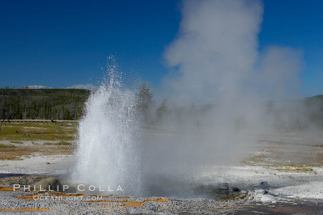 Jewel Geyser reaches heights of 15 to 30 feet and lasts for 1 to 2 minutes.  It cycles every 5 to 10 minutes.  Biscuit Basin. Yellowstone National Park, Wyoming, USA, natural history stock photograph, photo id 13502