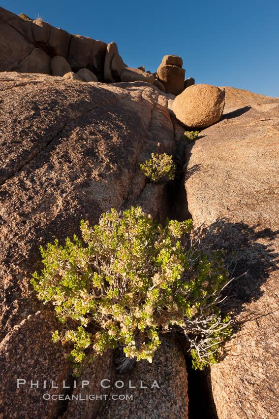 Desert southwest scenic in Joshua Tree National Park, California. Joshua Tree National Park, California, USA, natural history stock photograph, photo id 26782