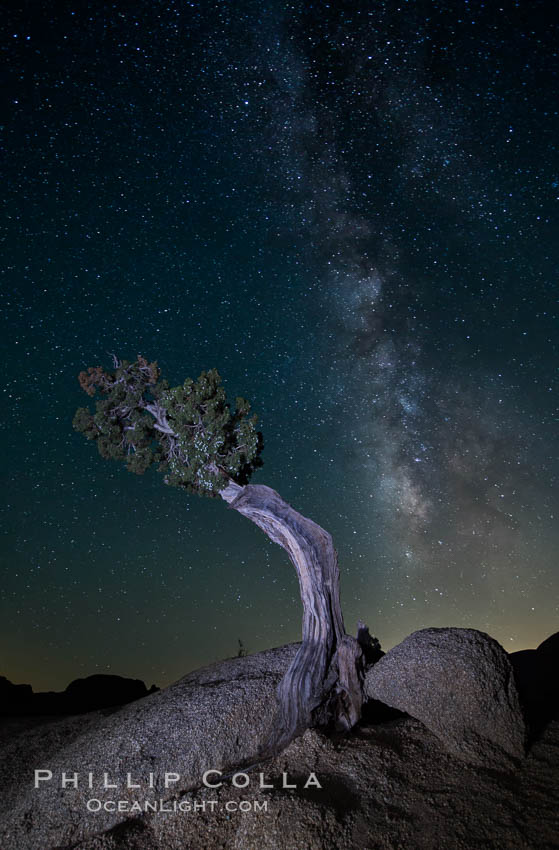 Juniper and Standing Rock with Milky. Joshua Tree National Park, California, USA, natural history stock photograph, photo id 27804