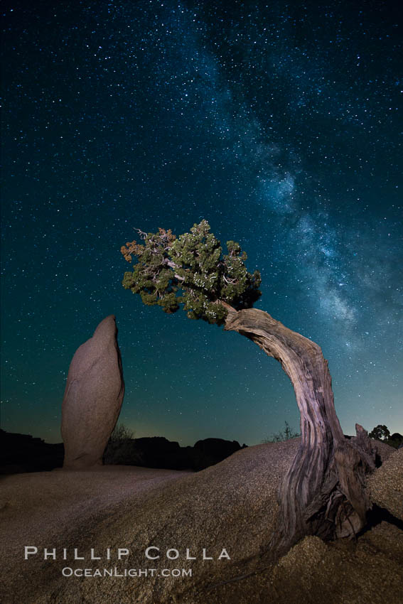 Juniper and Standing Rock with Milky. Joshua Tree National Park, California, USA, natural history stock photograph, photo id 27803