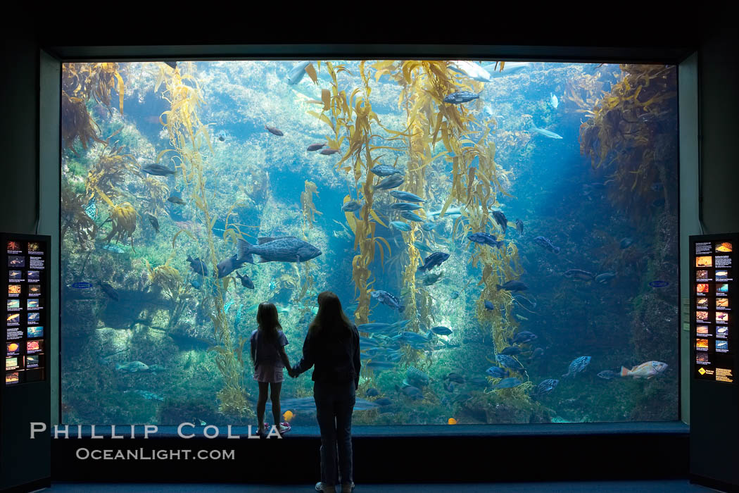 Visitors admire the enormous kelp forest tank in the Stephen Birch Aquarium at the Scripps Institution of Oceanography.  The 70000 gallon tank is home to black seabass, broomtail grouper, garibaldi, moray eels and leopard sharks. Stephen Birch Aquarium, La Jolla, California, USA, natural history stock photograph, photo id 14543