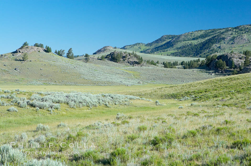 Lamar Valley, summer. The Lamar Valleys rolling hills are home to many large mammals and are often called Americas Serengeti. Lamar Valley, Yellowstone National Park, Wyoming, USA, natural history stock photograph, photo id 13657