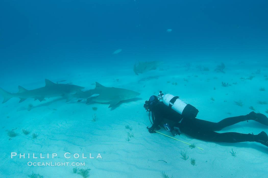 Lemon shark and photographer Bruce Watkins. Bahamas, Negaprion brevirostris, natural history stock photograph, photo id 10794