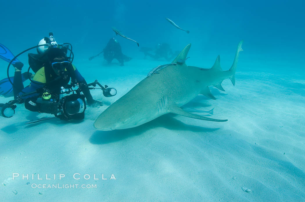 Lemon shark and photographer Jim Abernethy. Bahamas, Negaprion brevirostris, natural history stock photograph, photo id 10760