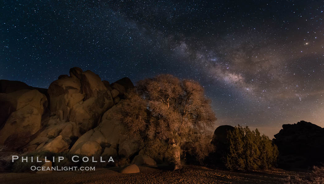 Image 28423, Live Oak and Milky Way, rocks and stars, Joshua Tree National Park at night. Joshua Tree National Park, California, USA, Phillip Colla, all rights reserved worldwide. Keywords: astrophotography, astrophotography landscape, dark, evening, galaxy, joshua tree national park, landscape, landscape astrophotography, live oak, milky way, milky way galaxy, nature, night, nightscape, noctural, oak, outdoors, outside, rock, scene, scenery, scenic, sky, star field, starscape, tree, view.