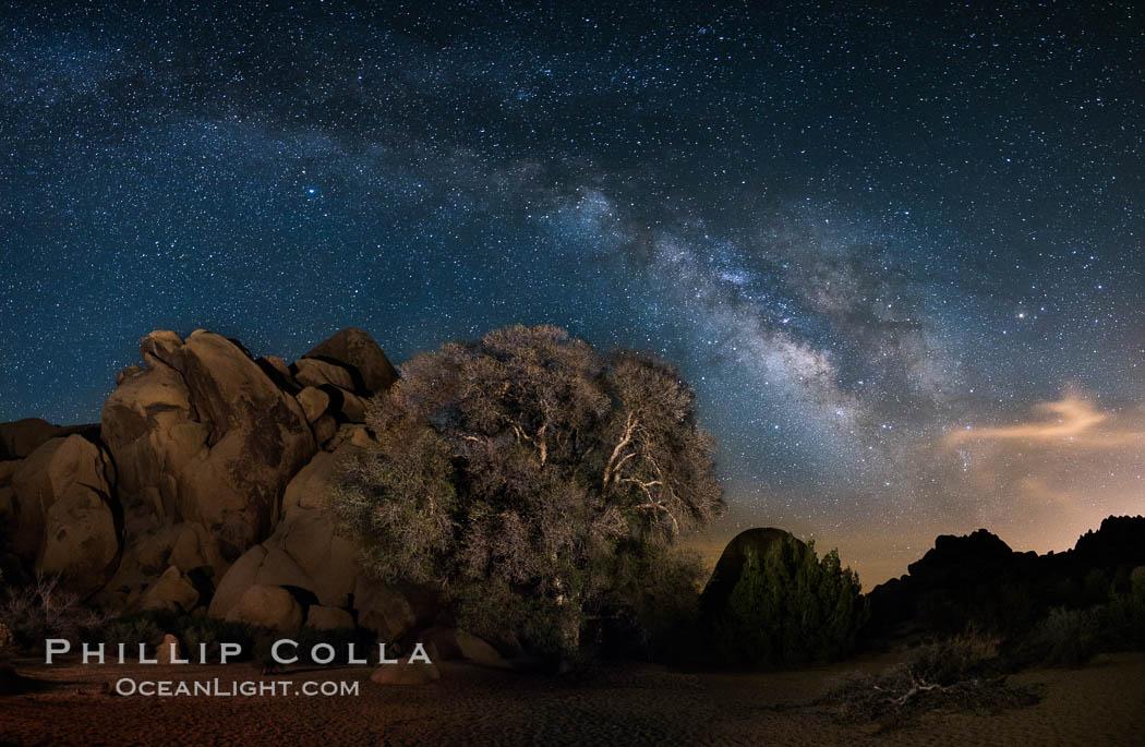 Live Oak and Milky Way, rocks and stars, Joshua Tree National Park at night. Joshua Tree National Park, California, USA, natural history stock photograph, photo id 28417