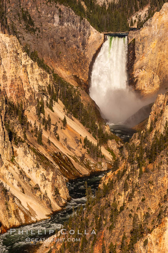 Image 07771, Lower Falls of the Yellowstone River. At 308 feet, the Lower Falls of the Yellowstone River is the tallest fall in the park. This view is from the famous and popular Artist Point on the south side of the Grand Canyon of the Yellowstone. Yellowstone National Park, Wyoming, USA, Phillip Colla, all rights reserved worldwide. Keywords: environment, grand canyon of the yellowstone, landscape, lower yellowstone falls, national parks, nature, outdoors, outside, river, river waterfall, scene, scenery, scenic, usa, water, waterfall, world heritage sites, wyoming, yellowstone, yellowstone falls, yellowstone national park, yellowstone park.