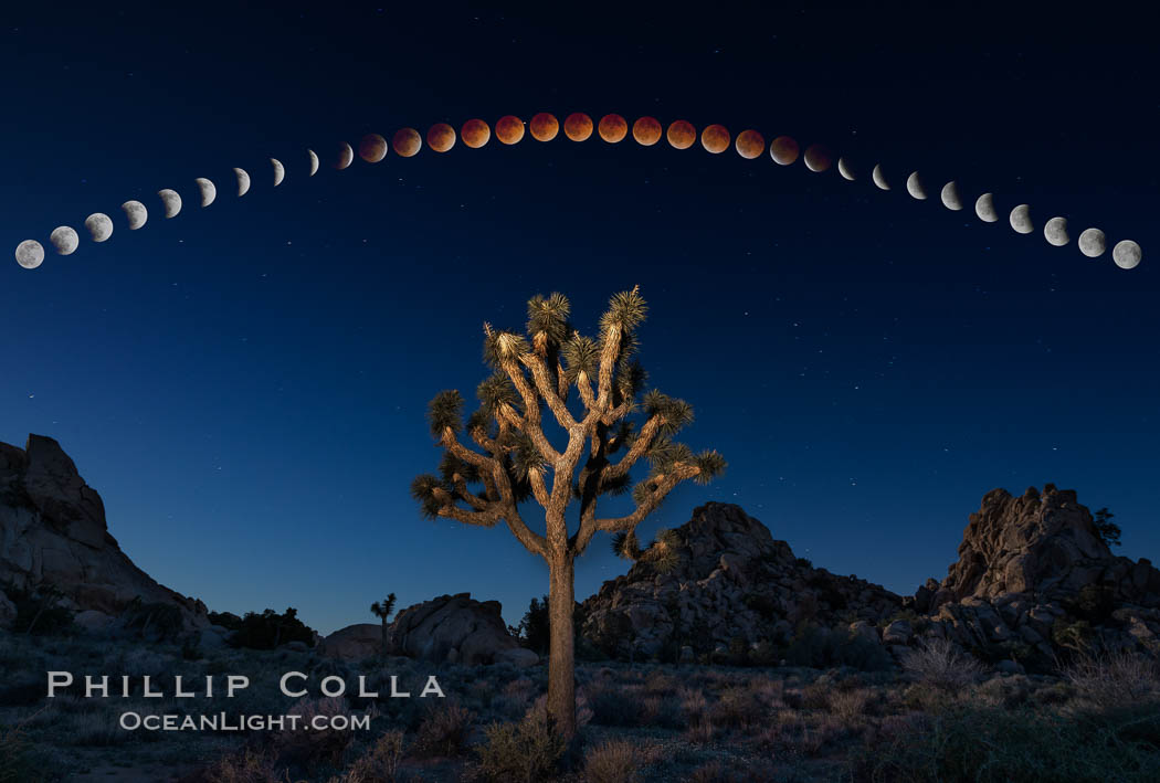 Lunar Eclipse and blood red moon sequence, stars, astronomical twilight, composite image, Joshua Tree National Park, April 14/15 2014. Joshua Tree National Park, California, USA, natural history stock photograph, photo id 29202
