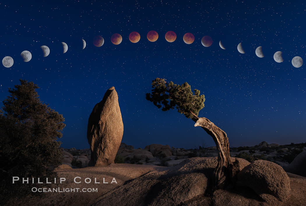 Lunar Eclipse and blood red moon sequence, over Juniper and Standing Rock, composite image, Joshua Tree National Park, April 14/15 2014., natural history stock photograph, photo id 29204