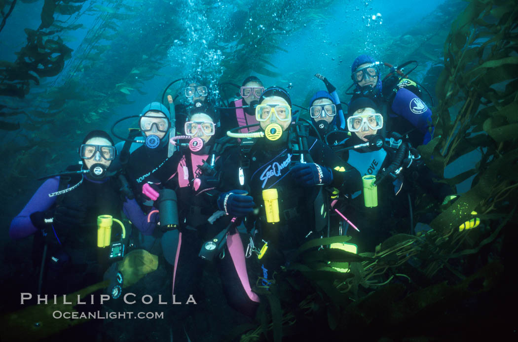 Divers and kelp forest. San Clemente Island, California, USA, Macrocystis pyrifera, natural history stock photograph, photo id 02990