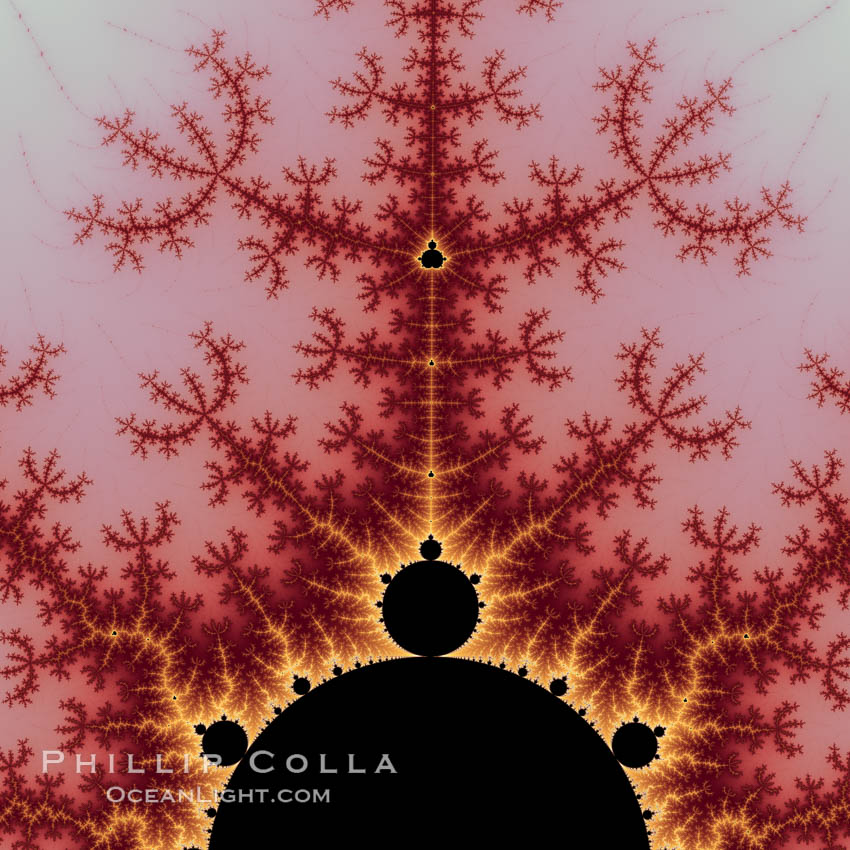 Detail within the Mandelbrot set fractal.  This detail is found by zooming in on the overall Mandelbrot set image, finding edges and buds with interesting features.  Fractals are complex geometric shapes that exhibit repeating patterns typified by <i>self-similarity</i>, or the tendency for the details of a shape to appear similar to the shape itself.  Often these shapes resemble patterns occurring naturally in the physical world, such as spiraling leaves, seemingly random coastlines, erosion and liquid waves.  Fractals are generated through surprisingly simple underlying mathematical expressions, producing subtle and surprising patterns.  The basic iterative expression for the Mandelbrot set is z = z-squared + c, operating in the complex (real, imaginary) number set., Mandelbrot set, natural history stock photograph, photo id 10383