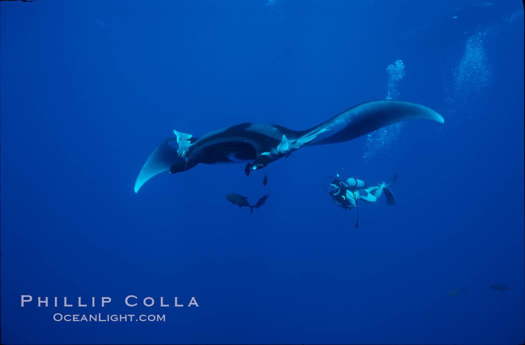 Manta ray and scuba diver. San Benedicto Island (Islas Revillagigedos), Baja California, Mexico, Manta birostris, natural history stock photograph, photo id 02470