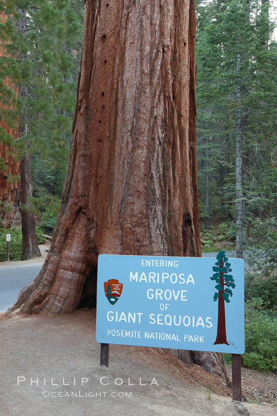 Marisposa Grove entrance.  Sign marking entrance to the Mariposa Grove of Giant Sequoia trees in southern Yosemite National Park. California, USA, natural history stock photograph, photo id 23271